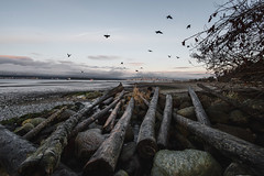 Spanish Banks (eric.vanryswyk) Tags: moody vancouver british columbia canada nikon d610 nikkor city forest trees mountains clouds light dark downtown towers cloudy stormy
