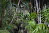 Vietnam (Alexis Rangaux) Tags: vietnam fantasticnature nature travel