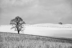 2018 Winter Snow-39 (Michael L Coyer) Tags: winter snow farm field tree pasture white barn fence ditch husbandry branch m50 clintonroad clintonrd eatonrapids tompkins hills rollinghill silo