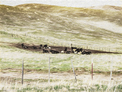 Laydown Yard (davidseibold) Tags: america animal barbedwirefence benaroad california cattle grass jfflickr kerncounty mountain painting photosbydavid plant postedonfb postedonflickr postedonsmugmug unitedstates usa