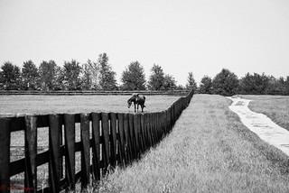 Horses of Kentucky