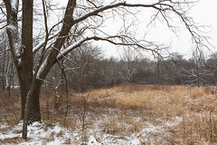 We've Been Here For Awhile And This Is How It Is (John Westrock) Tags: trees winter nature wisconsin overcast snow midwest canoneos5dmarkiii canonef2470mmf28lusm waukesha minookapark