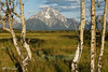 Mount Moran Through The Birch_27A1218 (Alfred J. Lockwood Photography) Tags: alfredjlockwood nature landscape mountmoran grandtetonnationalpark valley grasses summer morning wyoming rockymountains birchtrees