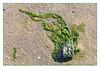 River jewels (Joao de Barros) Tags: joão barros abstract