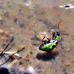 Life and death in the pond thumbnail