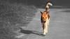 Light of trust (khondokar Touhid Likhon) Tags: dogs dog puppy pet animal zooanimal streetphotography street bestpet bestdog blackandwhitestreet dhaka2k17 bangladeshi india indiananimal