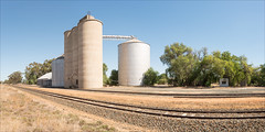 goornong-pano-2478-82-ps-w (pw-pix) Tags: silos steel concrete shed storage grain grainhandling grainstorage transshipping weighbridge tracks rails ballast sleepers railsiding grainsiding panorama stitchedpanorama distortion curvature gravel grass weeds dirt trees buildings structures cylinders cylindrical motorcycleride r1200rt autumn goornongrailsiding goornonggrainsiding goornong northcentralvictoria centralvictoria victoria australia peterwilliams pwpix wwwpwpixstudio pwpixstudio
