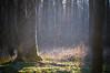 Forest lights (LUKÁCS VIKTOr) Tags: lights morning happy mystic nikon nikkor vsco color deep dark nature naturephotography