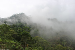 Into the clouds (edward.evans) Tags: forest clouds sierradelmerendón merendonmountains honduras cusuco cusuconationalpark cloudforest ranforest nature centralamerica latinamerica mountains