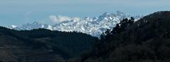 Los Picos de Europa desde Naveda (Roger S 09) Tags: asturias cabranes naveda picosdeeuropa picos montaña nieve snow