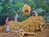 গ্রাম বাংলা।।।  #AdobeLover #GreenLife #Bangladesh #Love #WinterMorning #DslrClick #RamdomClick (alexmahmud) Tags: dslrclick love wintermorning ramdomclick bangladesh greenlife adobelover