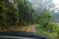 Leaving today (LeftCoastKenny) Tags: madagascar day16 andasibe driveway trees brush mist car hood