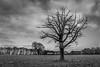 Tree b&w edited (***tuttifrutti***) Tags: canon canon5d canon5dmkiii canon5dm3 canon2470mm canon2470mmf28l blackwhite bw canonlenses canon2470mmf28 landscape wintertree
