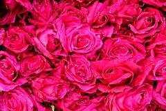 Floral freshness (Rahul Gaywala) Tags: floral flower fresh garland gujarat market merigold morning ornament rose surat vibrant