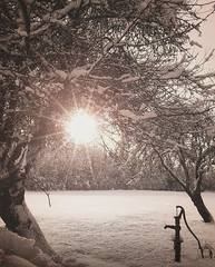 ~ a glimpse ~  Riddarhyttan, Sweden (Tankartartid) Tags: landskap countryside landsbygd landscape trädgård garden sun sol träd snö tree trees snow vinter winter natur nature norden nordic västmanland riddarhyttan europe sverige sweden instagram