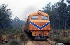 J553  XB1017 16 December 1981 Nannup Line (RailWA) Tags: railwa joemoir philmelling westrai xb1017 nannup line