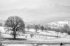 2__.jpg (Nu Mero) Tags: hiver paysage nb neige valléedevillé nature neuveéglise grandest france fr