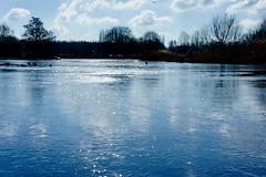 DSC06455 (hofsteej) Tags: middendelfland vlaardingervaart holland zuidholland natuurmonumenten broekpolder february