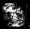 濾過 (filtering) (Dinasty_Oomae) Tags: konica konical コニカ コニカl 白黒写真 白黒 monochrome blackandwhite blackwhite bw outdoor 千葉県 千葉 chiba 千葉市 幕張 makuhari 影 shadow