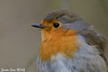 Jean-Luc Wolf_2018-02-18_11-16-15 (Jean-Luc Wolf) Tags: oiseaux parcdesceaux rougesgorges sceaux antony îledefrance france fr