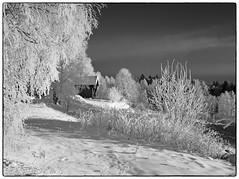 Nannestad 9. januar 2018 (#5 - b&w) (Krogen) Tags: norge norway norwegen akershus romerike nannestad winter vinter landscape landskap krogen fujifilmx100 bw blackwhite svarthvitt svhv silverefexpro