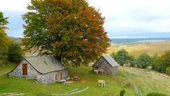 2017.09.26_0064_buron de Galabert - gîte (Monts d'Aubrac - 48340) (mageroya) Tags: aubrac vache gîte buron