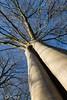 20180107_032_3417.jpg (gunna.schurmann) Tags: baumstamm flora fotountersicht himmel blauerhimmel
