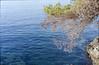 Scan-180106-0013 (Fred.Erik) Tags: croatia ocean tree film canon p ultron cosina vogtländer 35mm 17 rangefinder sea summer rock tetenal selfdevelop