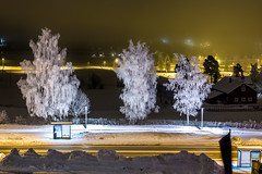 Snowy Trees in Hamar (Einar Schioth) Tags: snow frost winter evening trees tree nationalgeographic ngc norway norge nature night sky canon clouds cloud fog vividstriking hamar ringsaker scandicringsaker photo picture outdoor ice einarschioth