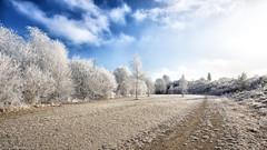 The beauty of winter (++sepp++) Tags: bayern deutschland graben lechfeld landschaft landscape landschaftsfotografie winter länder de hoarfrost raureif bäume trees bavaria germany sunny sonnig