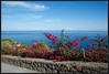 2017-09-07-Isole Eolie-DSC_0040.jpg (Mario Tomaselli) Tags: bougainvillea fiori flower isoleeolie mare panarea sea