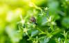 """Découvrir le monde"" (mathieuploton2) Tags: nature natural naturallight snail winter springtime springsign botany botanical litle flora floral fragility"