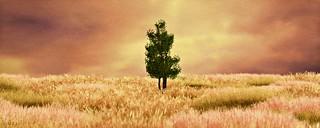 July Tree