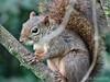 Esquilo (Luck Ribeiro) Tags: marsilac zonasul sãopaulo esquilo