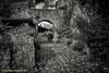 Castelmoron d'Albret (Jean-Pierre Verduzier) Tags: castelmonrandalbret pavés ruelle rues village rue pierres murs médiéval campagne vestige tourisme