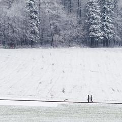 Sonntagsspaziergang mit Hund (zeh.hah.es.) Tags: ktzh winter schweiz switzerland schnee snow weiss white bonstetten wald forest feld hund dog mensch man mann frau woman spaziergang stroll grau gray grey weg path road sonntag sunday bank bench rot red grün green