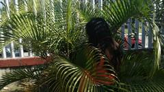 IMG_20180216_095012 (Erin Rivas 21) Tags: tubos persona cabello lineas palmera escuela sombra