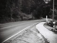 Footpath; Mount Dandenong Tourist Road (photo 2) (Matthew Paul Argall) Tags: jcpenneyelectronicstrobepocketcamera 110 110film fixedfocus focusfree blackandwhite blackandwhitefilm lomographyfilm subminiaturefilm grainyfilm 100speedfilm 100isofilm road street mountdandenong mountdandenongtouristroad yarraranges