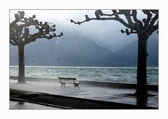 winter blues (overthemoon) Tags: switzerland suisse schweiz svizzera romandie vaud latourdepeilz lake léman windy spray trees mountains blue green wet cold winter hiver bench banc frame 50mm lakegeneva water wild stormy