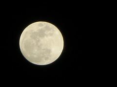Moon This Evening. (dccradio) Tags: lumberton nc northcarolina robesoncounty night moon lunar outdoors outside circle light round canon powershot elph 520hs dark blackbackground evening fullmoon goodevening goodnight