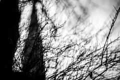 Church and trees-Thoughts about life and death (AlphaAndi) Tags: monochrome mono nahaufnahme nature natur urban trier tiefenschärfe dof deepoffield wow trees sony streetshots streets schwarzweis streetshooting street sonya7rii city closeup fullframe vollformat kirche church