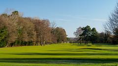 Bramley Golf Course-E2160403-Edit (tony.rummery) Tags: bramley bunker em10 fairway golf golfcourse landscape mft microfourthirds omd olympus surreyhills winter england unitedkingdom gb