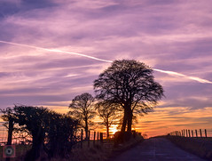 Sunset drive, Scotland (picsbyCaroline) Tags: sunset dusk road drive colour light sky sun tree scotland landscape scenic