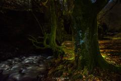 El bosque encantado (Javibeje) Tags: bosque eugi navarra nocturna quintoreal arbol haya rio javier bejarano nikon d7200 tokina 1116dxii luces noche night nightscape
