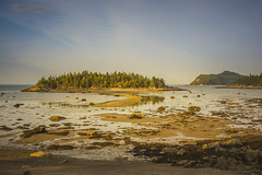 Parc du Bic (wimvandemeerendonk, back home) Tags: geel animal birds bird nature canada sony stlawrencebay park parcdubic outdoors outdoor ocean oceaan beach water wimvandem reflection quebec sea sand landscape goldenhour light panorama rock rocks wildlife ngc