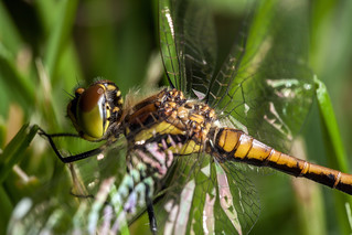 Glassy Wings - _TNY_1584