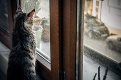 Her favourite place (Melissa Maples) Tags: istanbul turkey türkiye asia 土耳其 nikon d3300 ニコン 尼康 nikkor afs 18200mm f3556g 18200mmf3556g vr kadıköy caferağa moda msomoda kitten princess animal kitty cat window