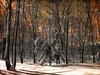 Winter Morn (bethrosengard) Tags: bethrosengard photomanipulation digitallyenhanced photoart digitalmagic digitalart