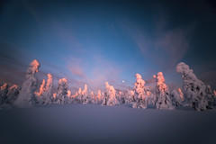 Moonrise in winterland (Björn Knif) Tags: pyhäluosto national park kansallispuisto suomi finland lapland sunset moonrise snow trees winter