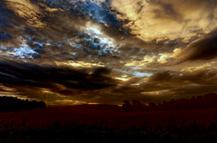 Stormy start. (alan.irons) Tags: skyscape sky dawn morning corn field clouds contrast colour angus scotland scottish scenery stormy hedge